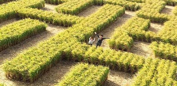 """【上海站】""""保卫玉米""""迷宫主题活动馆"""